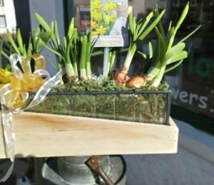 pretty box of scented Narcissus